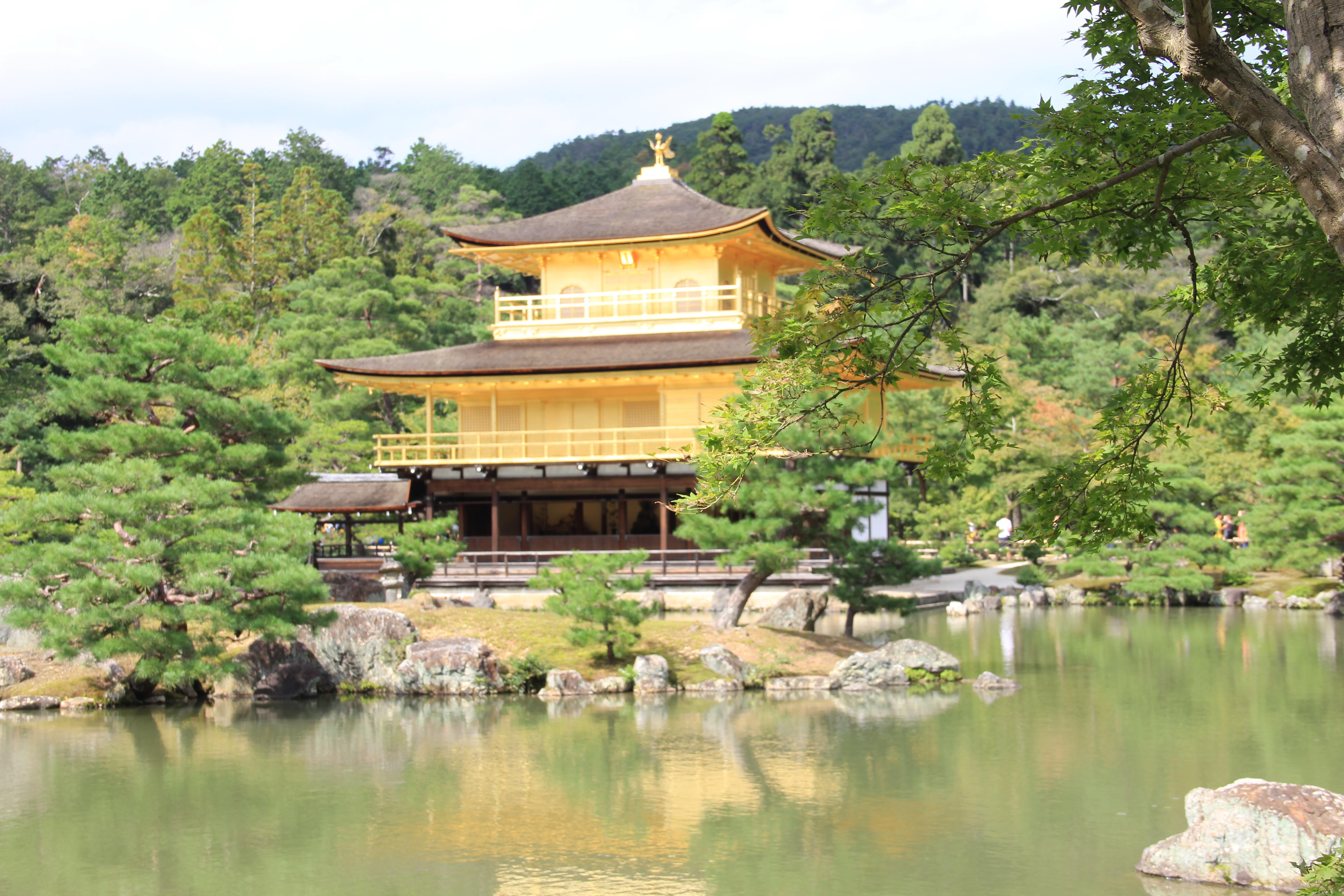 Летние курсы в Японии бесплатно!